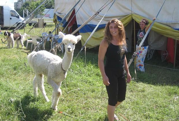 С южноамериканската алпака Йети