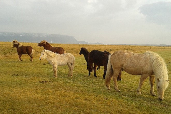 7 Исландия