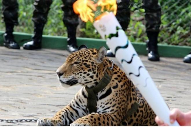 Jaguar_Rio_2016_die