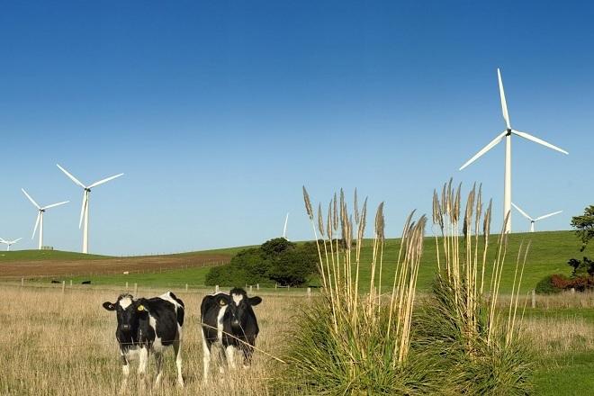 Зелена енергия, вятър
