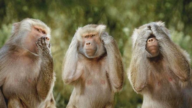 3-monkeys-wallpapers