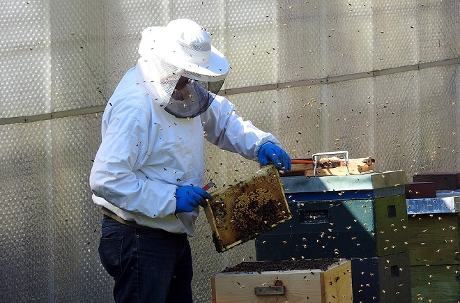beekeeper-2156663_960_720