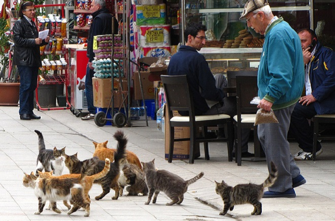cats-istanbul