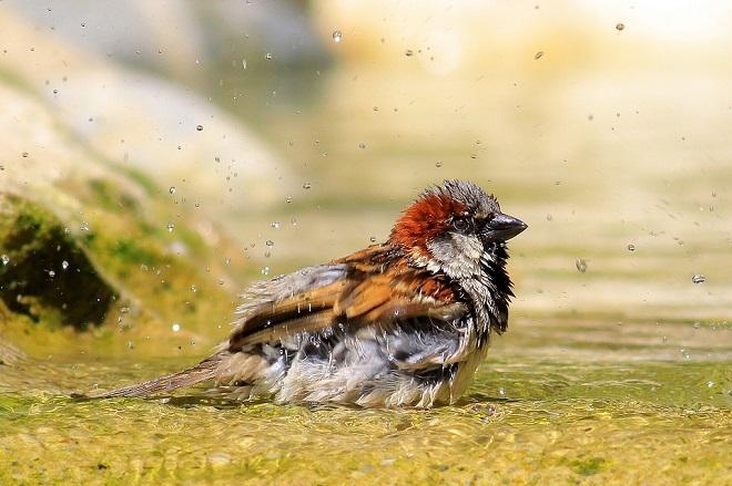 sparrow-1908357_960_720