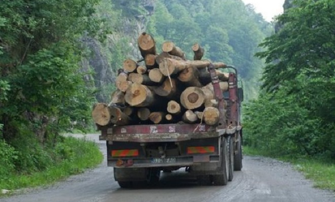 bialowieza-forest-is-not-the-only-forest-in-europe-under-threat