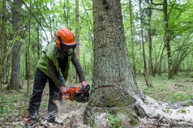 forestworker