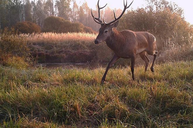 chernobyl-wildlife-camera-traps (1)