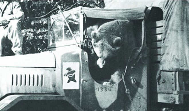 Wojtek-the-Bear-6