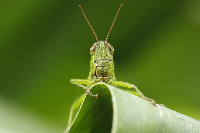 insect-1416984_960_720