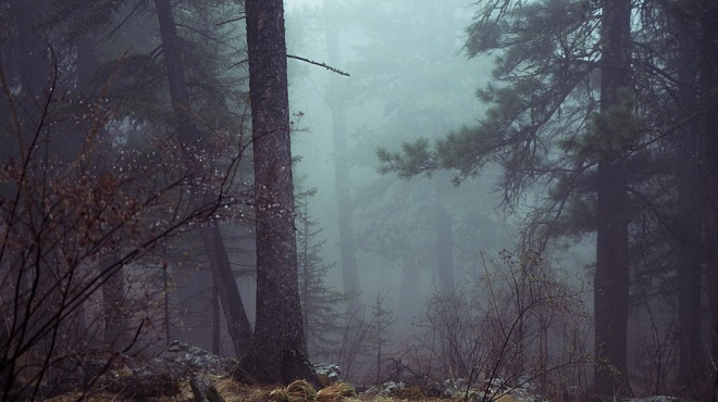forest-801777_960_720