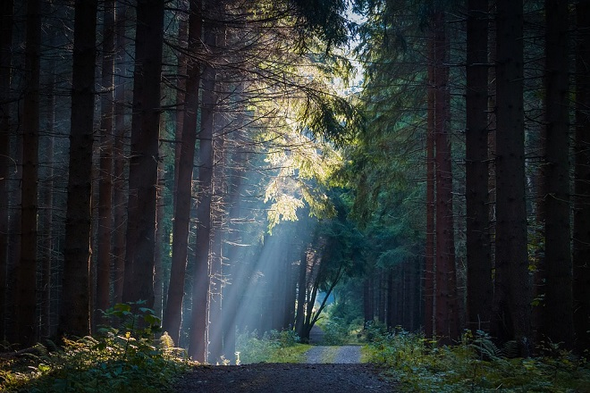 forest-2810439_960_720