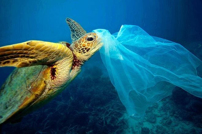 Turtle_eating_plastic_bag-1