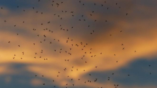 Dance Schools Mass Mosquitoes En Masse