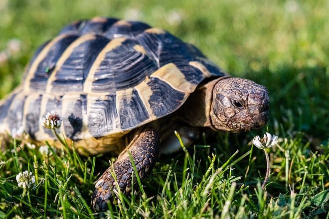 turtle-3422221_960_720
