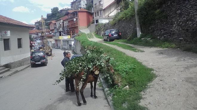 Макар и натоварено, магарето си има права и храна в изобилие