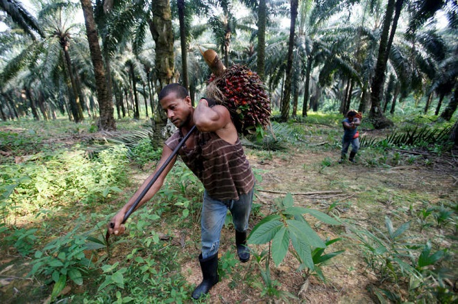 FILE PHOTO: Workers collect oil palm fruits at Felda Sungai Tengi Selatan plantation in Sungai Tengi